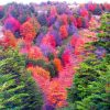 reserva-florestal-de-Magalhães